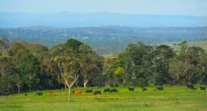 Yarraman Countryside